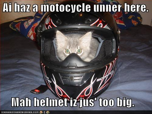 """Respecting"" your bike.-motorcycle-cat.jpg"